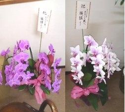 20130903_3hajime_flowers.jpg